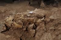Gea, la importancia de la paleontología