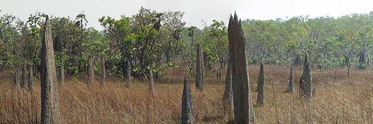 Contra la desertización, termiteros
