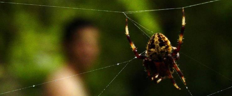 Curiosidades de la naturaleza: miedo racional