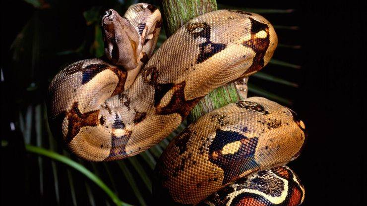 Curiosidades de la Naturaleza: isquemia serpentil