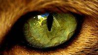Curiosidades de la naturaleza: factor H