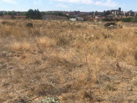 El PP insta al alcalde a acometer el desbroce de parcelas urbanas ante el riesgo de incendios