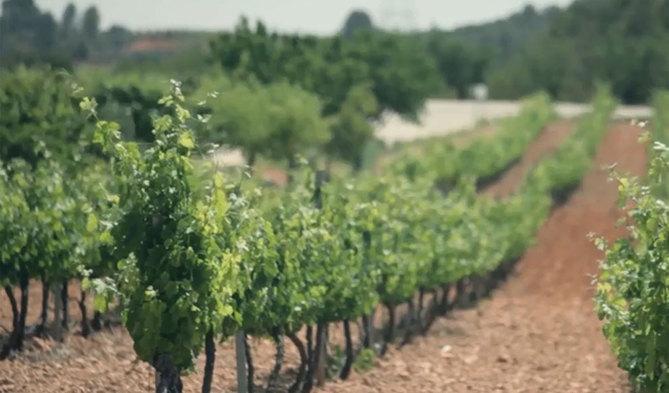 Agricultura concede ayudas por más de 3 millones de euros para la promoción de los vinos valencianos en el extranjero