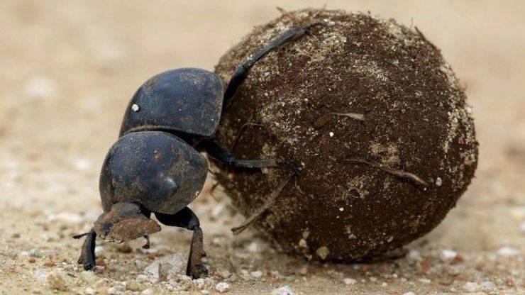 Curiosidades de la Naturaleza: trampa apestosa