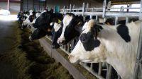 Aprobaremos un real decreto para conocer cómo funcionan los precios de la leche
