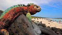 El cambio clim�tico pone en peligro Venecia o las Galapagos