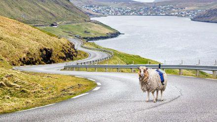 Sheep View: ayudando a las ovejas a mapear el mundo