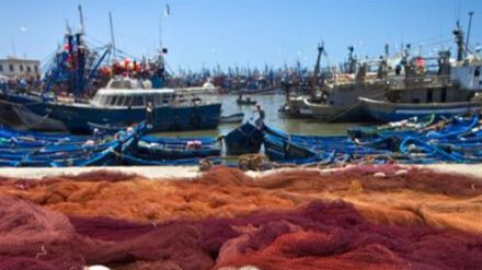 Ayudas para el sector pesquero por valor de 500.000 euros