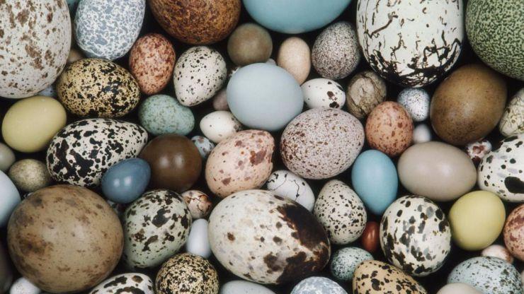 Curiosidades de la Naturaleza: cuestión de huevos
