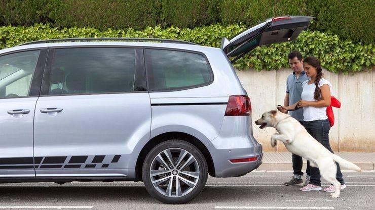 No sin mi perro: 8 consejos para viajar con mascotas
