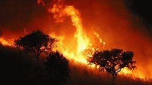 La urbanización y el cambio climático son los responsables de los incendios en el Sur de Europa