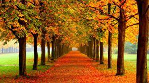 ¿Dónde está el otoño?