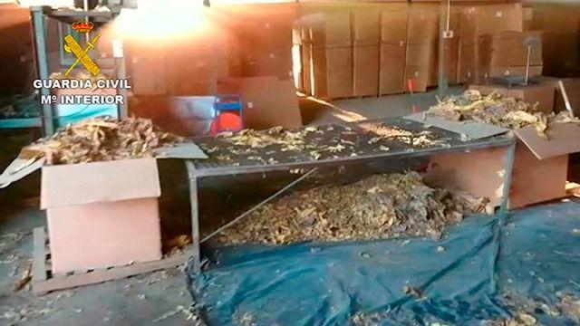 La mayor aprehensión de hojas de tabaco de Europa con la incautación de 250 toneladas