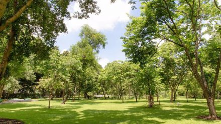 Varias zonas verdes de Madrid se renovarán en 2018
