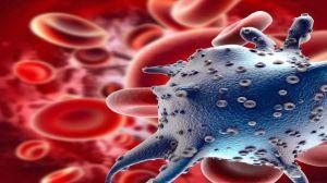 Las células tantean su entorno para explorarlo