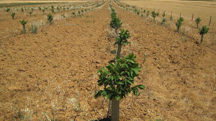 Agricultura y Ganadería de Castilla y León destina 2,5 millones de euros al fomento de organizaciones de productores