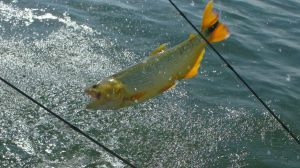 España traslada un mensaje de tranquilidad al sector sobre el acuerdo de pesca UE-Marruecos