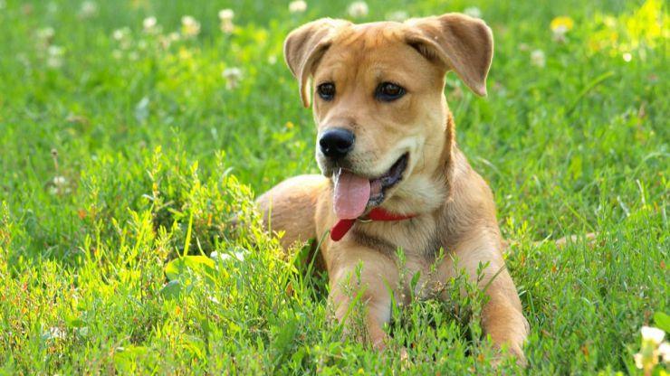 Pozuelo de Alarcón pondrá en marcha la construcción de un centro de protección animal