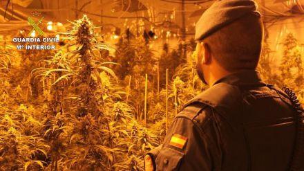 Desarticulada una organización criminal y desmantelado un cultivo de 12.000 plantas de marihuana