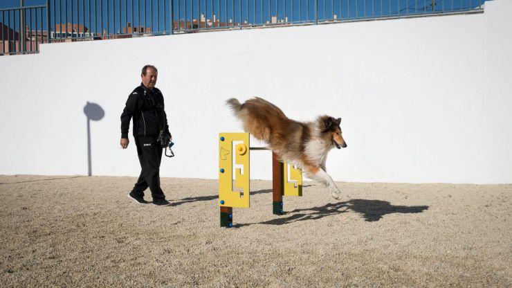 El Ayuntamiento de Almería efectuará diferentes reparaciones y mejoras en el parque canino del Parque del Andarax