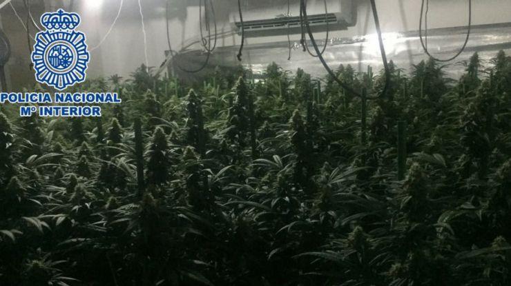 Descubren tres plantaciones indoor de marihuana en la provincia de Málaga