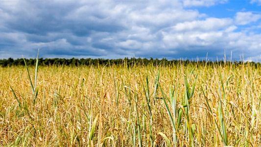Agricultura y Ganadería reconoce a la sección cunícola de la cooperativa Mesenor como nueva organización de productores