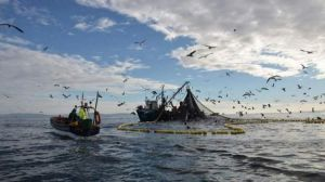 El calentamiento global puede reducir la pesca en un 60%