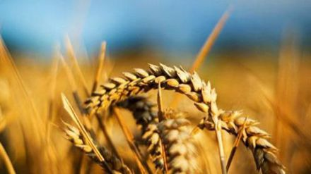 El Gobierno reduce el IRPF a los agricultores y ganaderos
