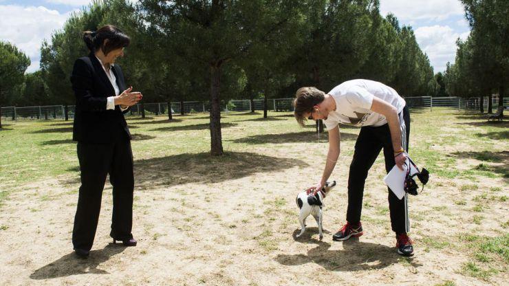 El Parque Peñalara de Pozuelo estrena una nueva zona canina