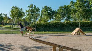 El Ayuntamiento de Majadahonda creará nuevas zonas caninas en los parques