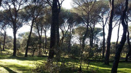 Los populares de Pozuelo proponen iniciar trámites para incorporar el Monte de Pozuelo al patrimonio municipal