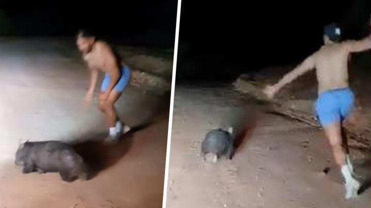 Mata a pedradas a un wombat y lo sube a Internet