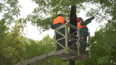 El Ayuntamiento de Madrid inicia la campaña de poda que afectará a más de 14.000 árboles
