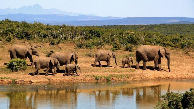 5 actividades para descubrir Sudáfrica