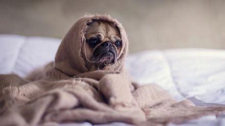 """Los veterinarios madrileños piden """"responsabilidad"""" al regalar mascotas en Navidad y recuerdan que """"no son un juguete"""""""