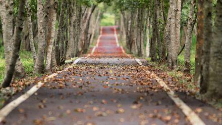 La vida te lleva por caminos raros