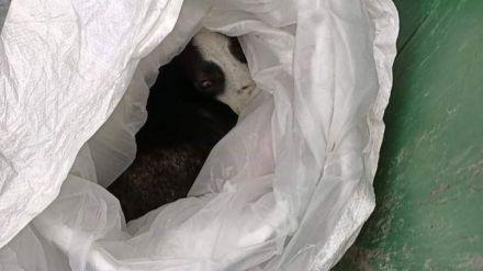 Rescatan a un perro arrojado dentro de una bolsa a un contenedor