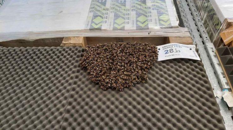 Evacúan una tienda de Alicante por un enjambre con más de 3.000 abejas