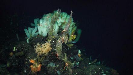Los animales del océano profundo tampoco escapan al cambio climático