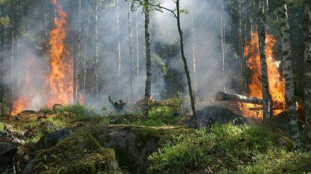 Los incendios caen entre enero y mayo un 45% respecto a la media de la última década