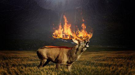 'El planeta en llamas': WWF alerta de una pandemia mundial de incendios forestales como 'nueva normalidad'