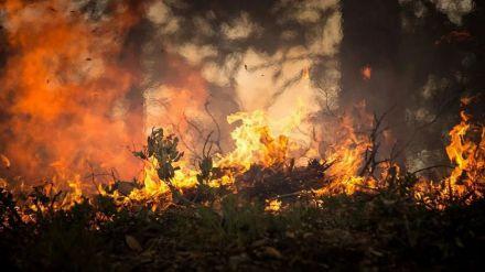 Greenpeace: El abandono de la España rural eleva el riesgo de grandes incendios