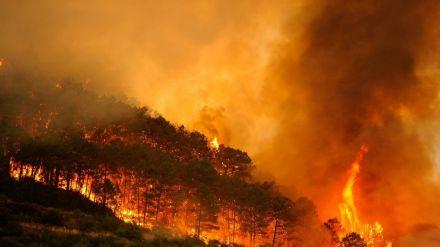 Alerta: los incendios en varias regiones del planeta agudizarán la emergencia climática