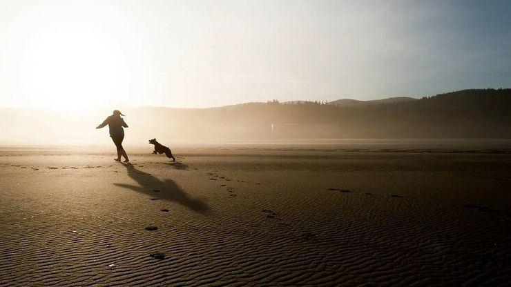Destinos económicos: Este verano date una oportunidad y lleva a tu perro contigo