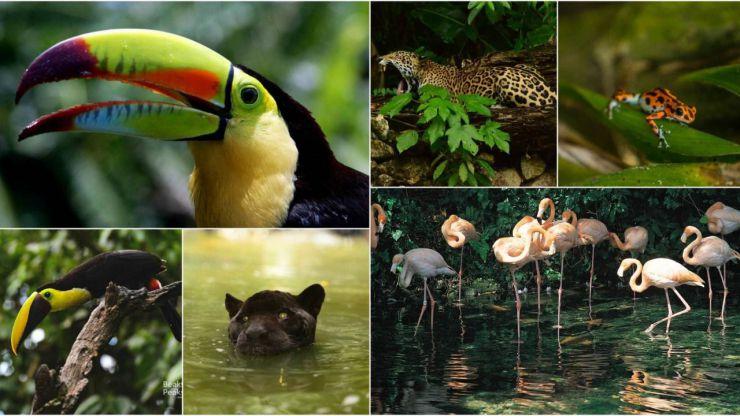 Cuatro de los animales más excéntricos del mundo se reúnen en Centroamérica