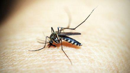 Algunos consejos para evitar las picaduras de mosquito