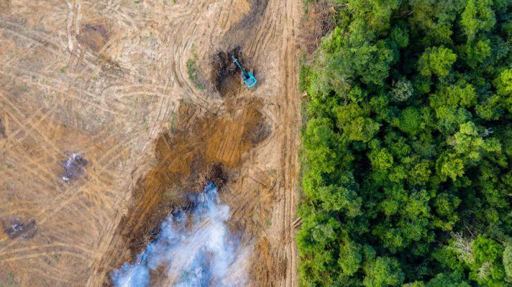 Más de 100 ONG lanzan una campaña para evitar la deforestación importada en la UE
