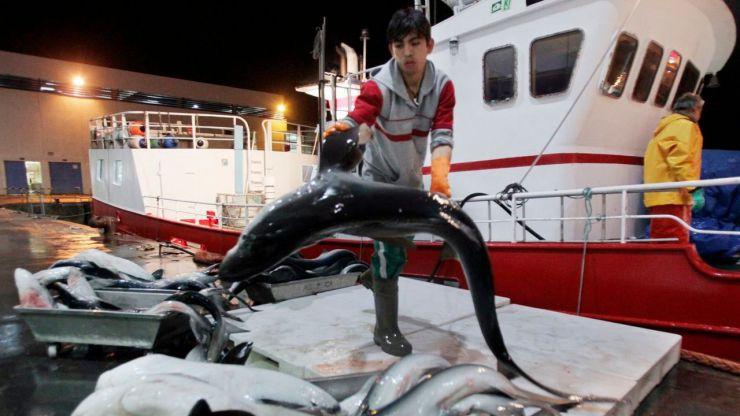 WWF exige al Gobierno que aclare las capturas españolas del amenazado tiburón marrajo
