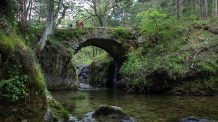 Ecologistas en Acción solicita la expropiación del Pinar de los Belgas y su inclusión en Guadarrama