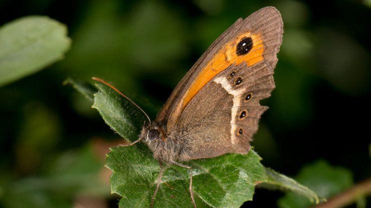 'Sin insectos no hay vida': La importancia ecológica de los insectos a examen